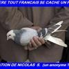 drrière un pigeon nicolas s.jpg