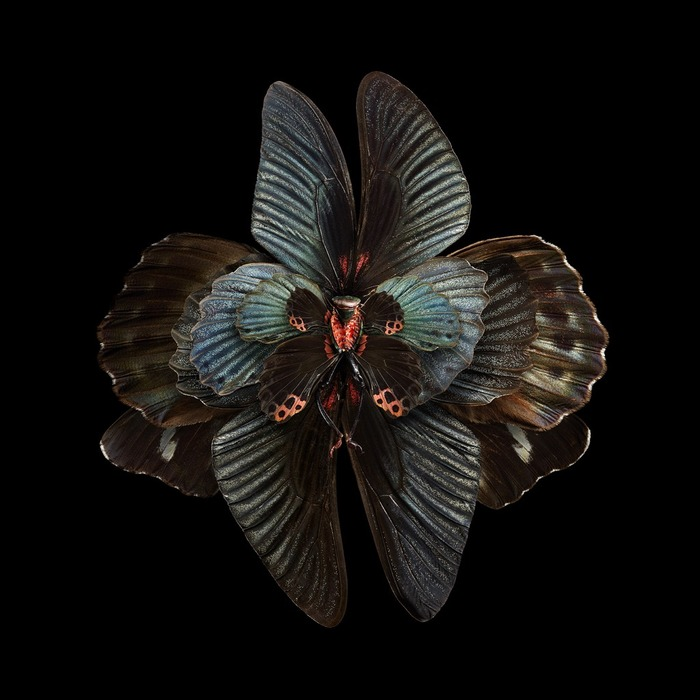 Les Fleurs d'Insectes de Seb Janiak