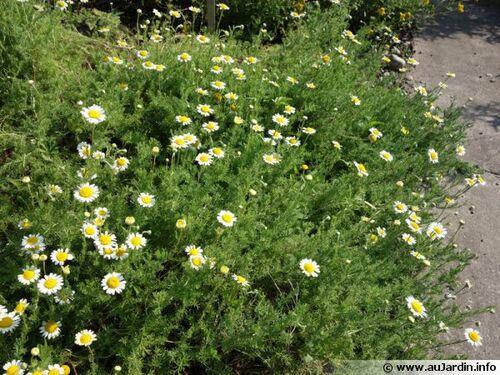 Maladies d'hiver : 5 plantes pour se soigner en douceur