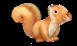 Tubes écureuils en png