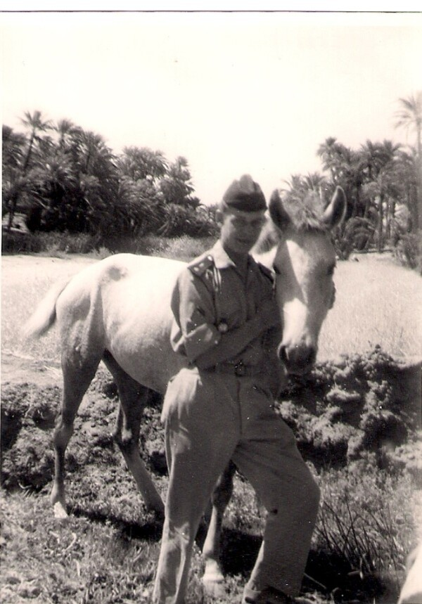 17-Palmeraie-de-Tiout--sud-oranais----1961-.jpg