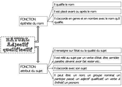 Séquence: la fonction du mot ou du groupe nominal