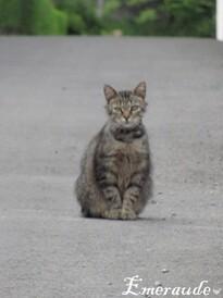 Photo Chat tigré - 24.06.11