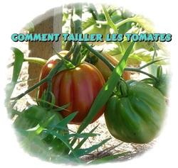 Comment tailler un pied de tomates