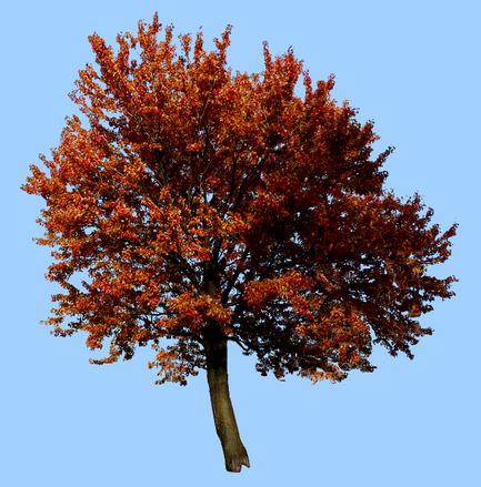 Tubes arbres
