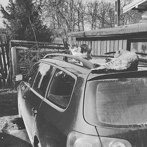 12 - Autres chats sur la voiture