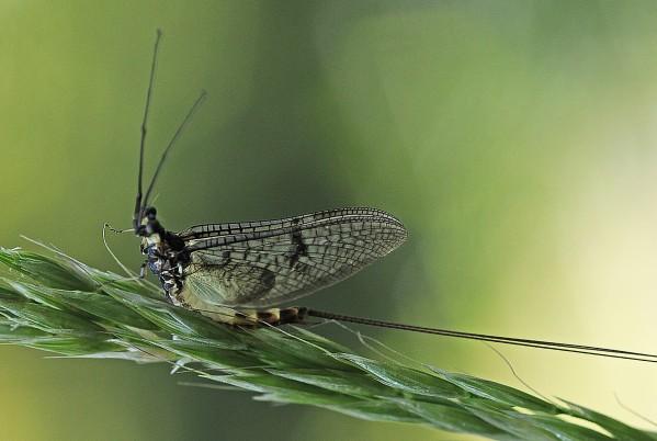 Insectes-papillons-5-9031-aa.jpg
