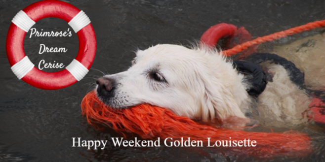 Golden retriever de Louisette Libert