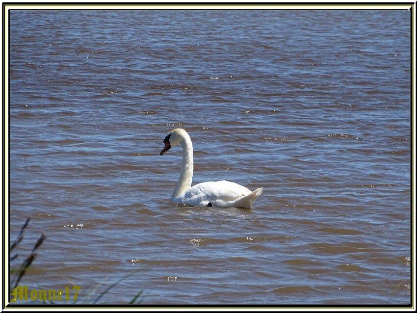 Balade dans les marais de Brouage (17)