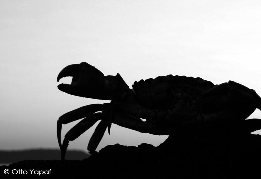 crabe-2.jpg
