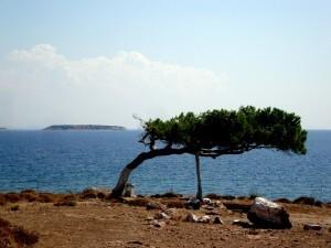 2014-09-05-11.20.54 ROLAND visite de Lesbos
