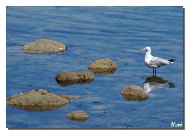 Le Morbihan (18)