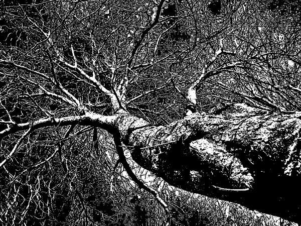 R01---Haut-de-l-arbre-nu.jpg