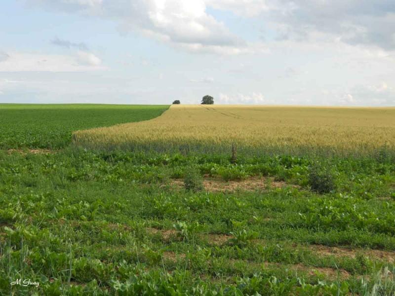 paysage-chezy-0072.jpg