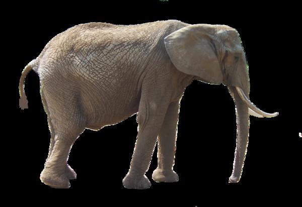 Tubes Eléphants