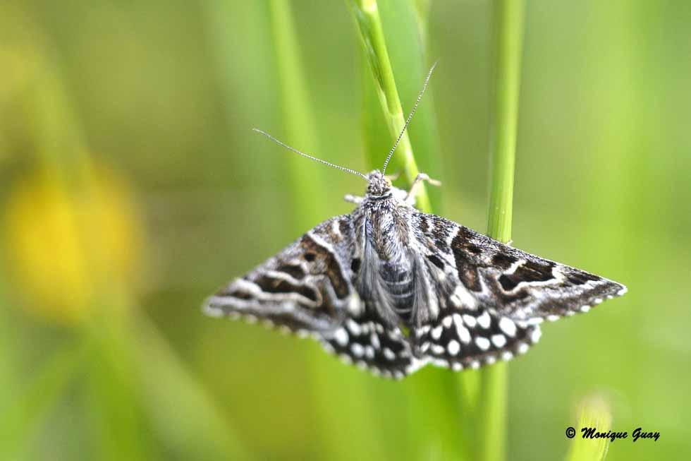 Papillons rencontrés dans la friche