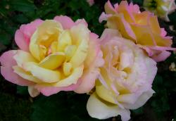 Tubes fleurs, tube roses