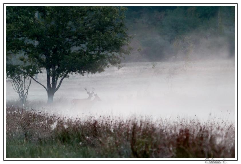 Couple dans la brume