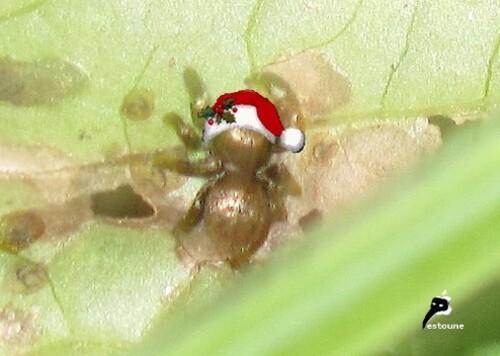 L'araignée de Noël