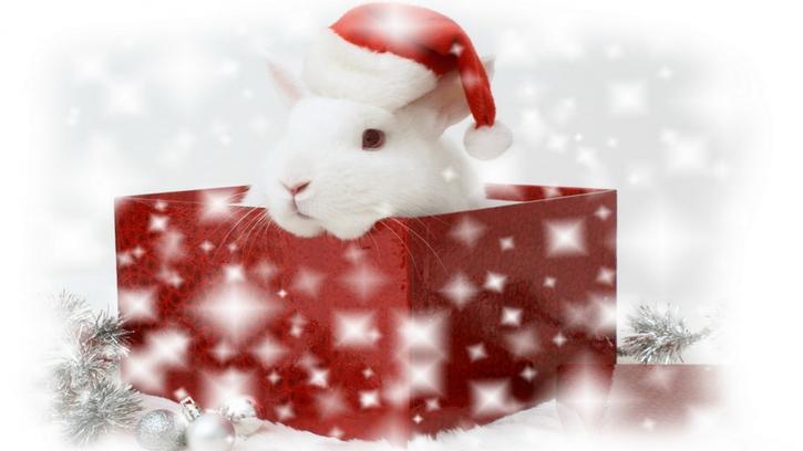 15 Images de Noël - 2