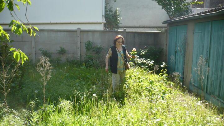 jardin en friche..