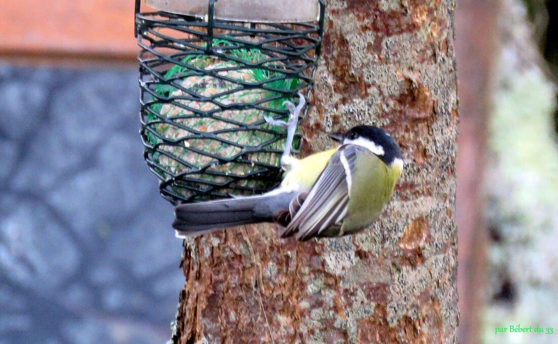 les oiseaux ont faim