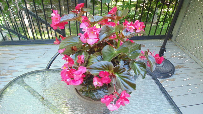 Jolies fleurs à peine à leur apogées