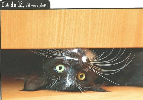 Le retour des chats...