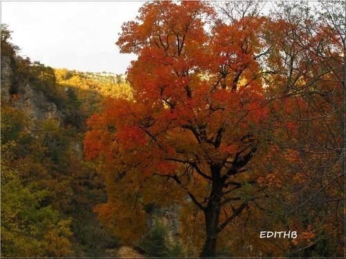 arbre couleurs d'automne (1)
