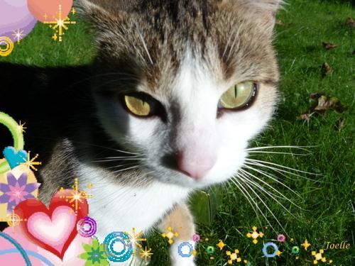 1é Mai chat