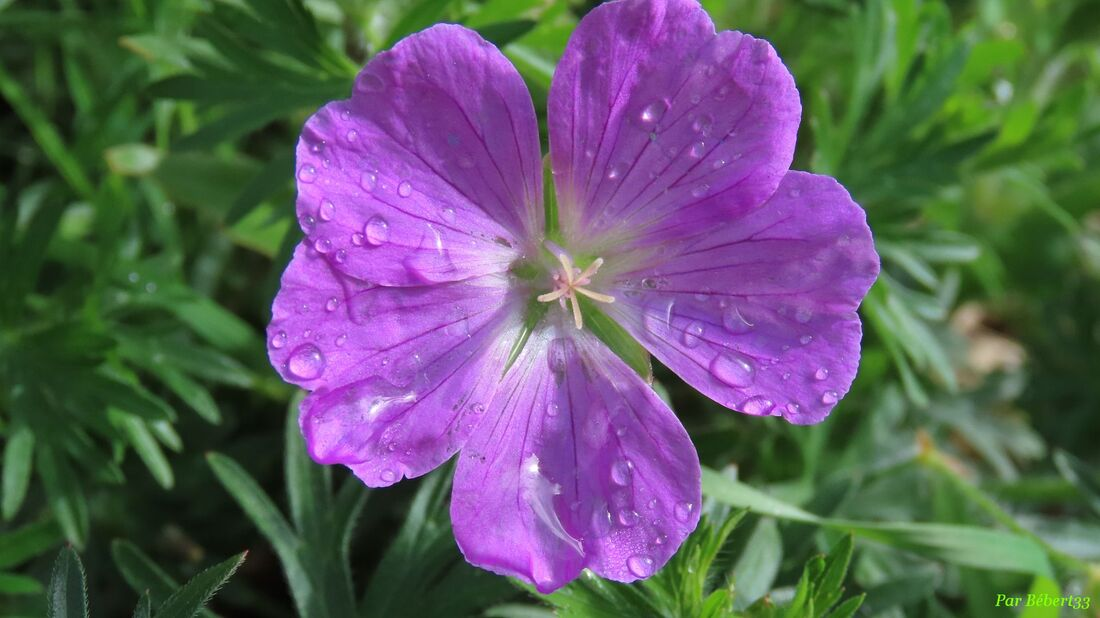 Nos fleurs du jardin -6