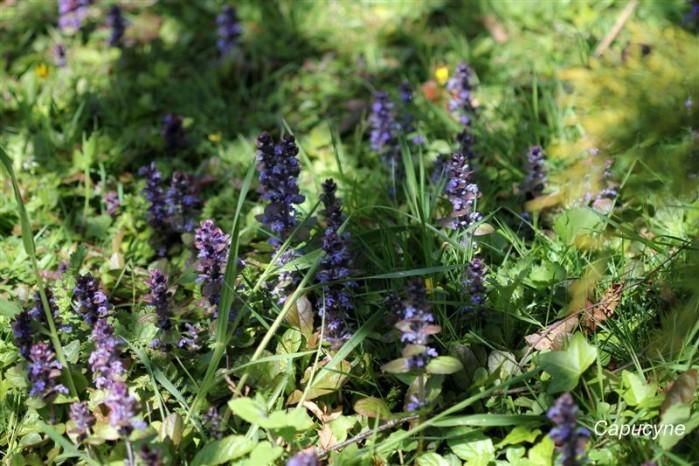 pelouse-fleurie 7314