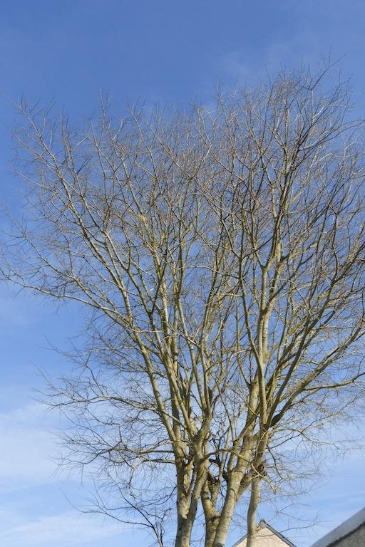 La Nudité des arbres ou leur squelette!