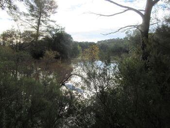 L'étang de Montbel