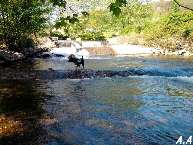 A la rivière