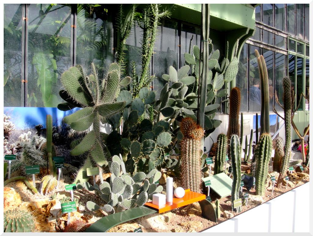 Plantation cactus jardin for Jardin plantation