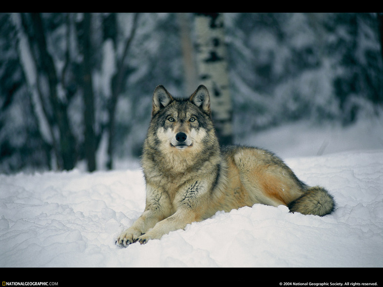 10 Images de la National Geographic