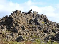 Convalescence islandaise
