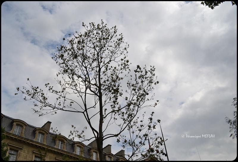 6 Janvier 2016 : Plantation du Chêne du Souvenir ...