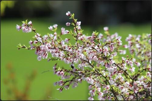 Petit tour à la Foire aux plantes d'Enghien