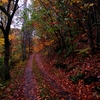 fall-colors-country-road