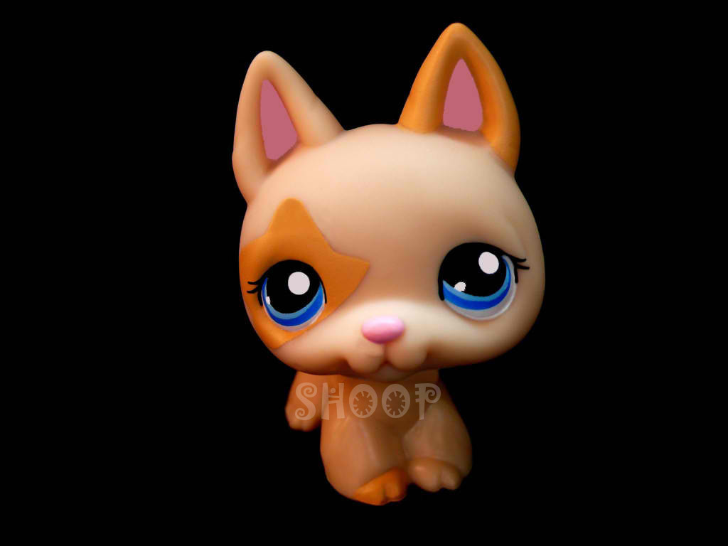 LPS 1447