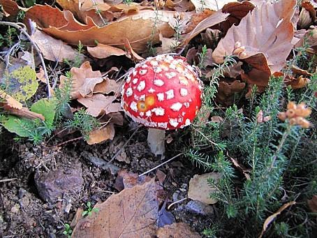 les-champignons-0066.JPG
