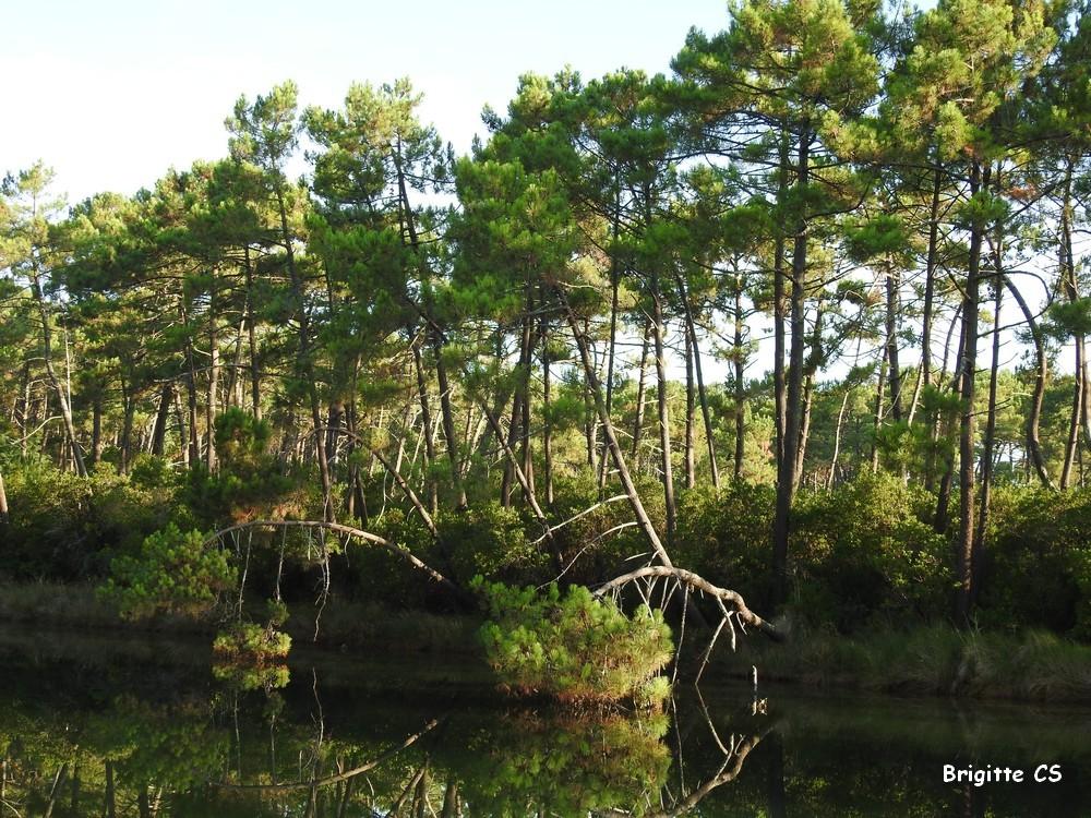 Balade aux Réservoirs de Piraillan...