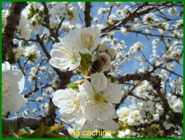 abeille-2013--17-.JPG