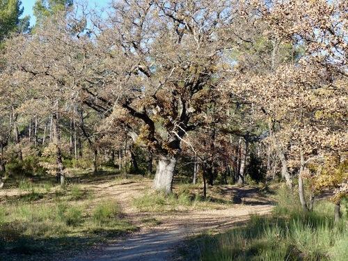 Forêt de Gréasque (2)