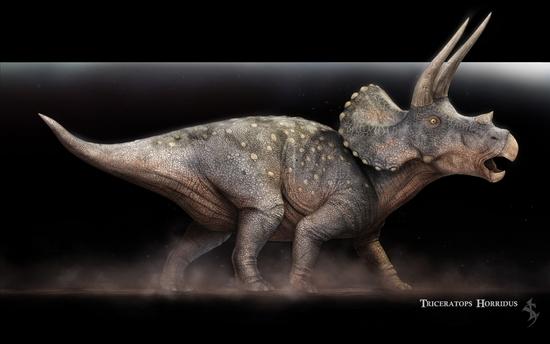triceratops_horridus_zeusbox_com_h162011-1920x1200
