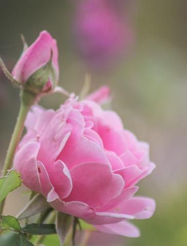 Le jardin comme exutoire (21)