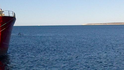 Puerto Madryn & la Peninsula Valdes