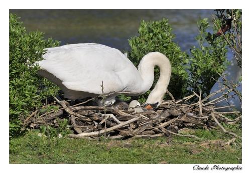 Premières Naissances en direct...du Teich
